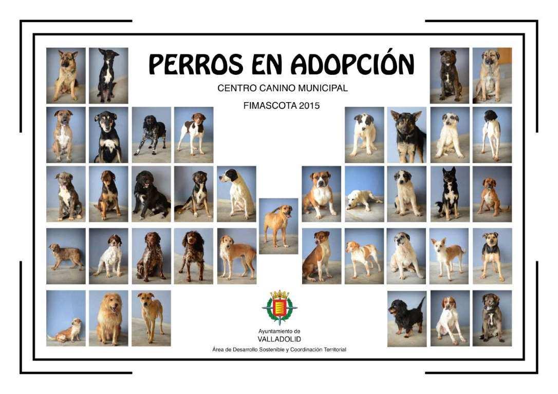YDRAY-PERROS_ADOPCION_A0